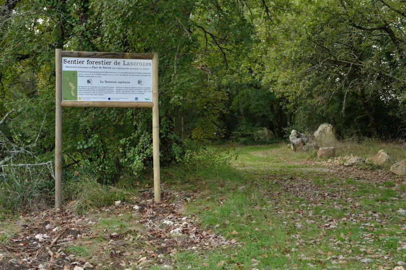 sentier forestier de Lascrozes