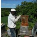 abeilles-vignette