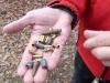 Douilles et balles de tous calibres